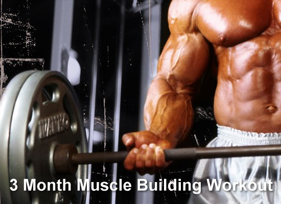 3 Month Muscle Building Workout