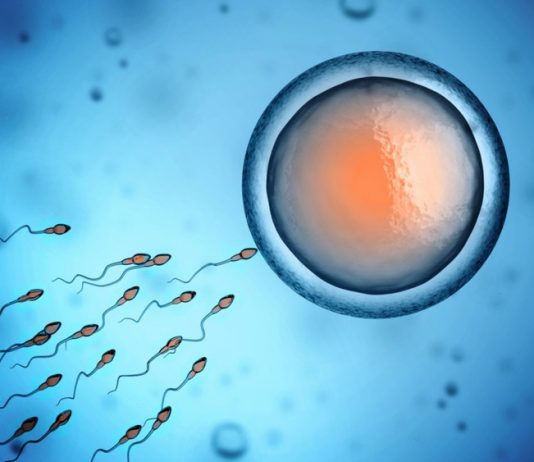 male multivitamins for fertility