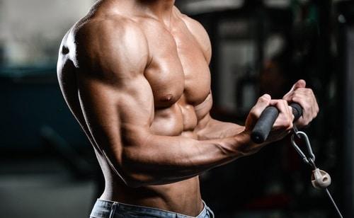 bodybuilder bicep