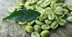 green cofee bean extract