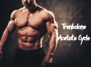 Trenbolone Acetate Cycle