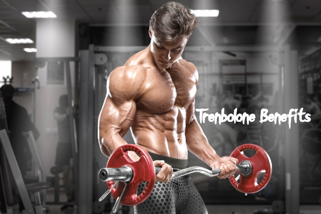What is Trenbolone Cycle, Effects and Dosage